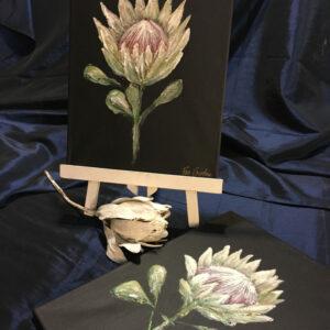 Protea On Black Canvas