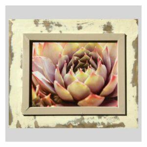 Distressed Frame: Sunset Kaktus