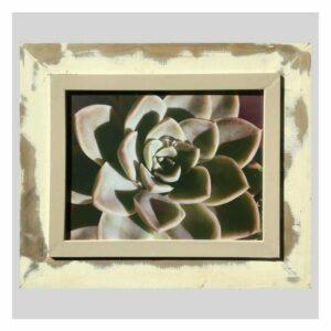 Distressed Frame: Green Desert Rose