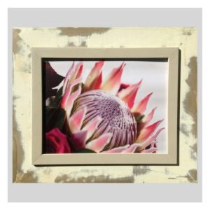 Distressed Frame: King Protea Linker Hoek, Pienk En Pers Roos