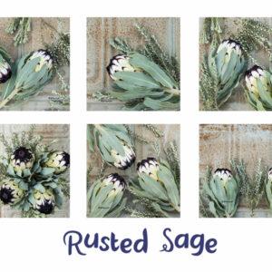 Protea Coasters Set Of 6 (Rusted Sage)