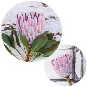 Protea Potstands Set Of 2 (Framed King)