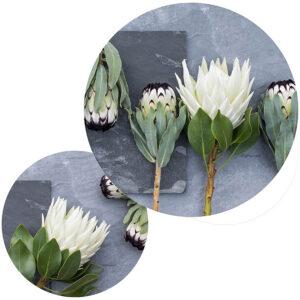 Protea Potstands Set Of 2 (Sage & Grey Shades)